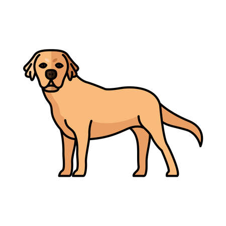 golden retriever dog pet mascot breed character vector illustration design