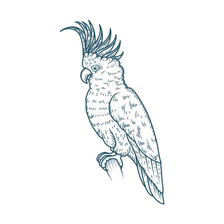 parrot realistic character drawn style icon vector illustration design