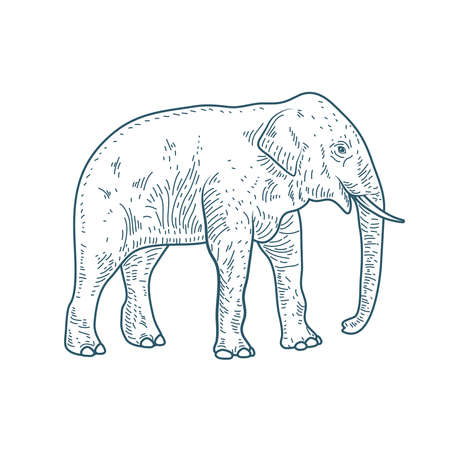 elephant realistic character drawn style icon vector illustration design