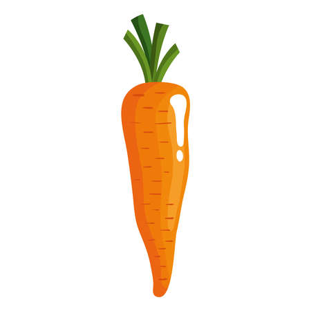 carrot vegetables healthy food icon vector illustration design