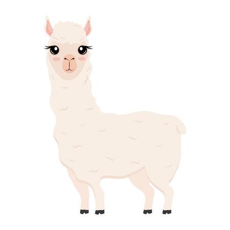 cute alpaca exotic animal character vector illustration design