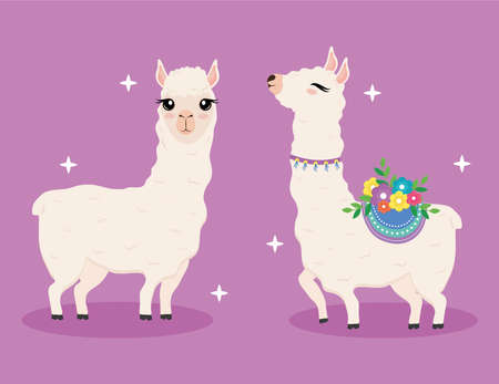 cute two alpacas exotic animals with flowers decoration characters vector illustration design