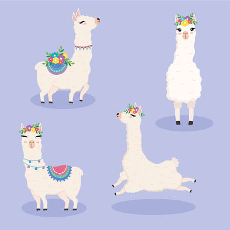 cute flour alpacas exotic animals characters with flowers vector illustration design