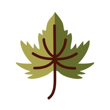 maple leaf line and fill style icon design of Plant natural floral theme Vector illustration Illusztráció