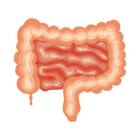intestine organ human anatomy icon Vecteurs