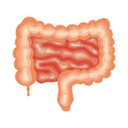 intestine organ human anatomy icon Vektoros illusztráció