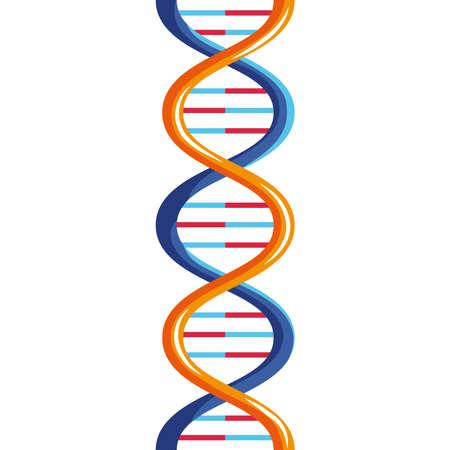 orange and blue dna molecule