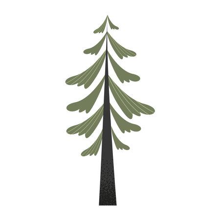 coniferous pine tree plant icon