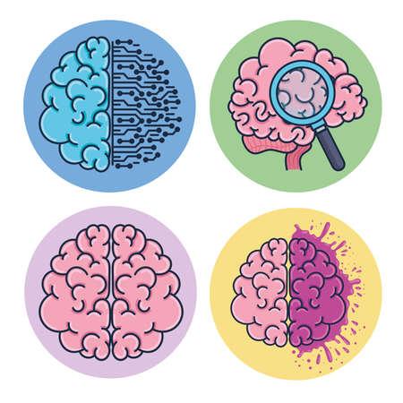 set of brains humans