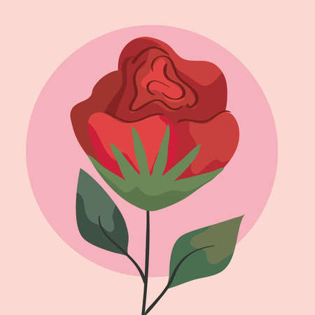 beauty red rose flower