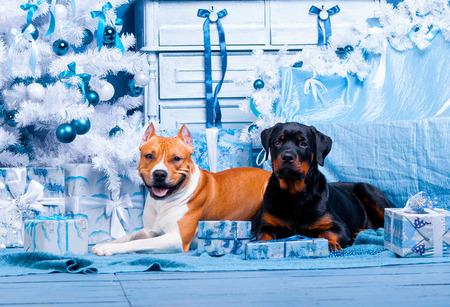 Cani di Natale felice con un albero di Natale. Felice anno nuovo Archivio Fotografico - 92214811