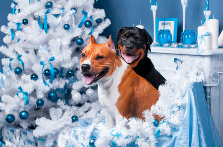Cani di Natale felice con un albero di Natale. Felice anno nuovo Archivio Fotografico - 92214812