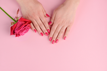Elegant and glamorous pink nails. Womans well-groomed hands and rosebud. Classic style manicure. Фото со стока