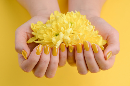 Gerbera flowers in cupped hands. Nails painted with glossy yellow polish. Fashion trend for spring / summer.