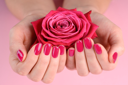 Rose bud in womans hands. Simple but amazing nail design with hot pink. Beauty of plain manicure. 免版税图像