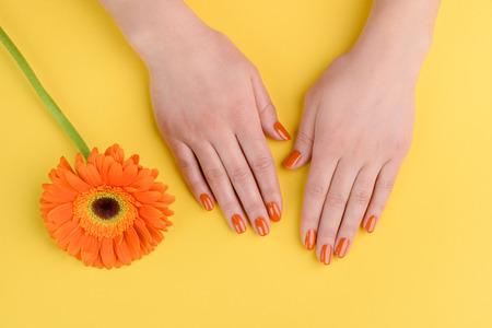 Gerberabloem en vrouwenhanden op gele achtergrond. Nagels gepolijst met oranje lak.