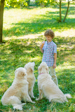 Ice Cream Puppies Stock Photos And Images - 123RF