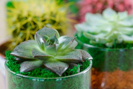Succulent garden in glass pots Stok Fotoğraf - 110036883
