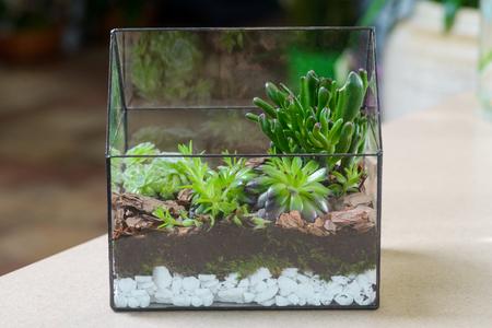 Terrarium with succulent plants Foto de archivo