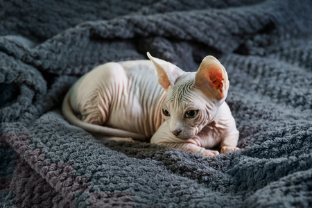 Cat resting on a bed