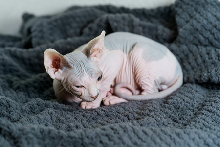 Curled up kitten