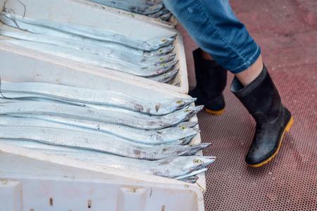 Long silver fish Stock Photo - 117223553