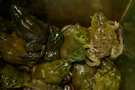 Fresh frogs in the market Imagens