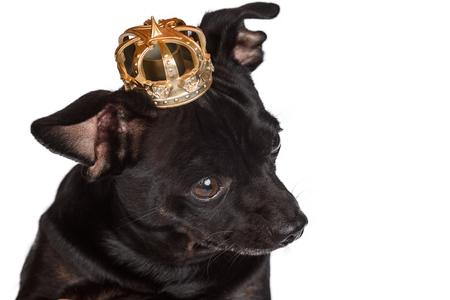 Close up on royal dog