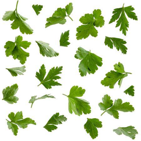 Set of parsley leaves