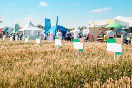 Wheat plantation at a fair