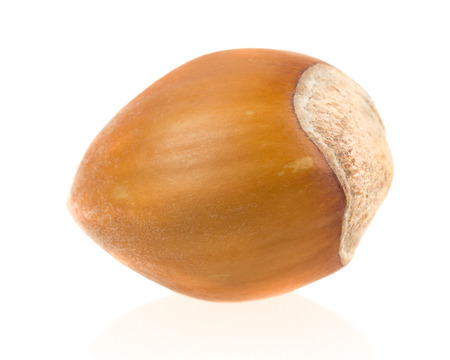 forest nut on white . photo