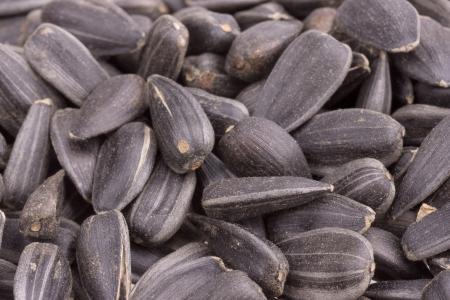 convex shape: sunflower seeds. Stock Photo