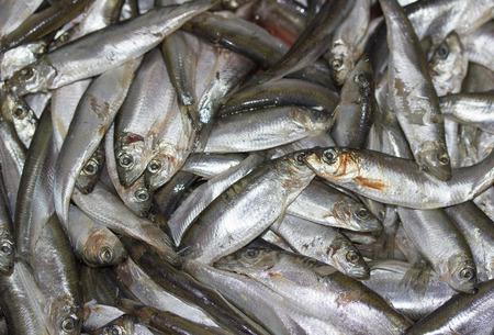 sprat: Fresh raw spot on fish market.