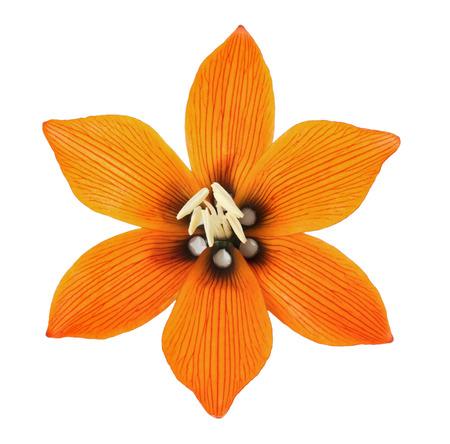 Lilis flower on a white background. photo