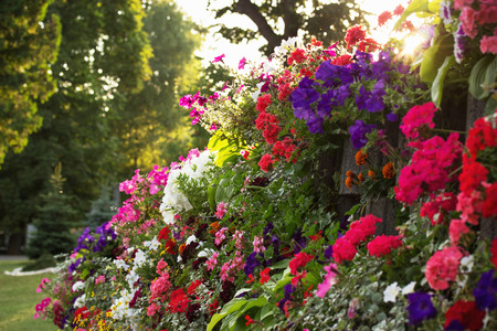 flowerbed of colorful flowers. photo