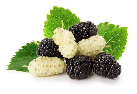 black and white mulberry isolated on the white background.