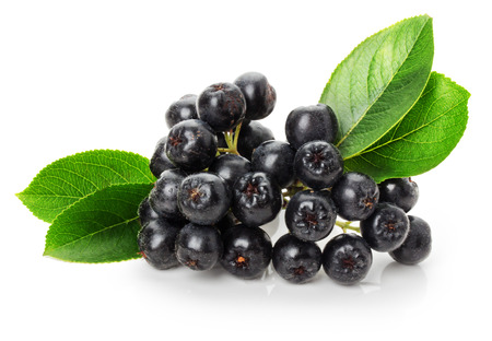 ashberry: black ashberry isolated on the white background. Stock Photo