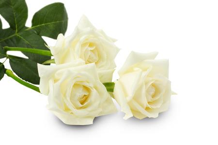 白い背景に分離された白いバラ
