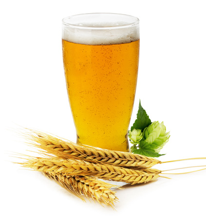 Glass of fresh Beer with green Hops and ears of barley isolated on the white background. photo