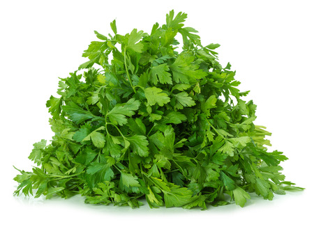 cilantro: parsley leaves isolated on the white background