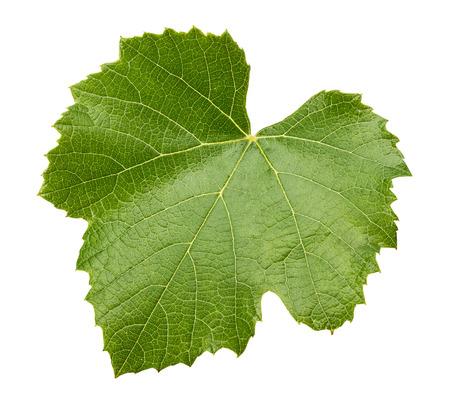 Uva lascia isolato su sfondo bianco. Archivio Fotografico - 32494940