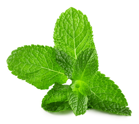 mint leaves isolated on the white background.