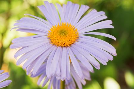 purple flower: purple flower.