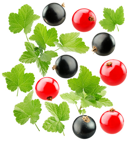 black currants: red and black currants isolated on the white background.