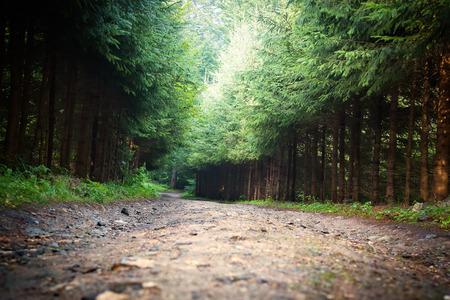 long road: long road in a wood.