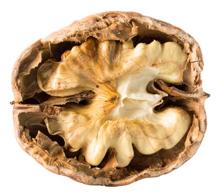 nucleus: walnut nucleus isolated on the white background. Stock Photo