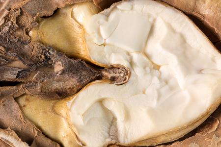 nucleus: close up jf walnut nucleus.