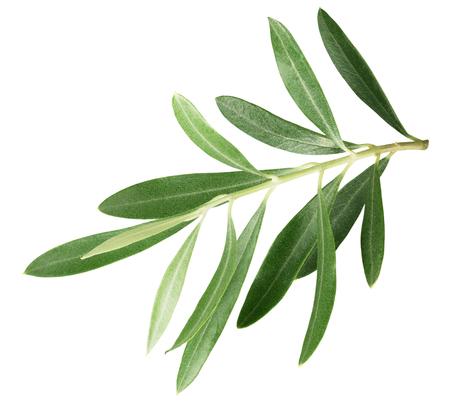 白い背景に分離されたオリーブの葉と枝。 写真素材