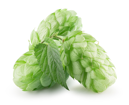 green hops isolated on a white background. Stock Photo