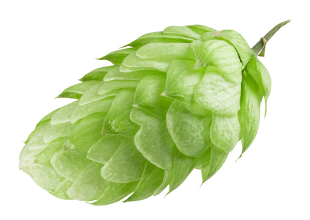brewery: green hops isolated on a white background. Stock Photo